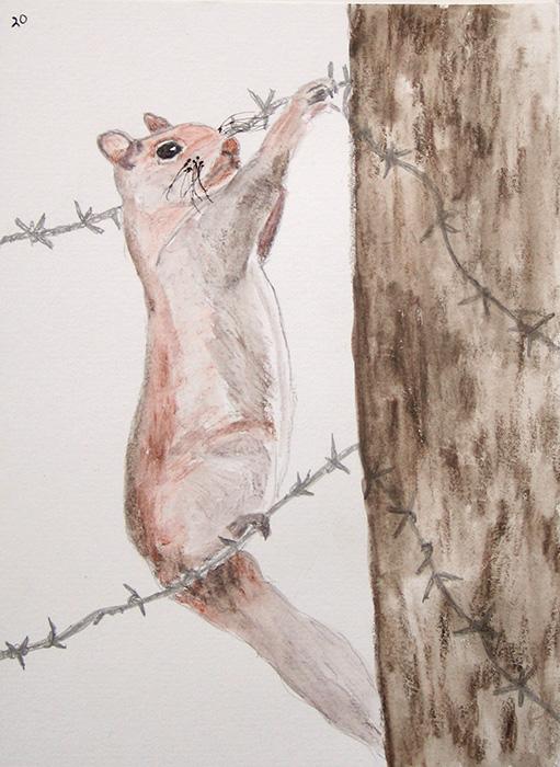 1735-S70-DeschutesGroundSquirrel-Oct13,10-WS