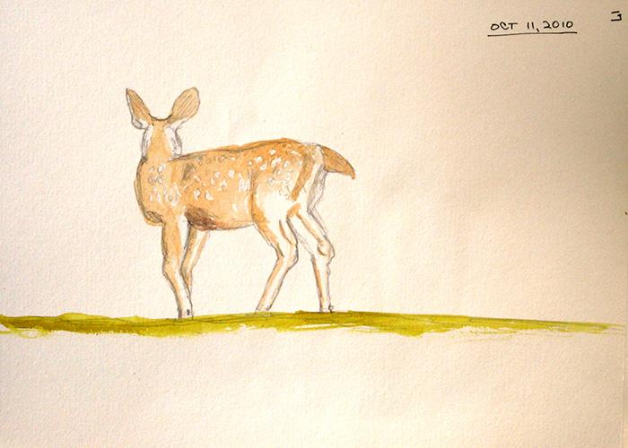 1718-S70-DeerForOctSB-Oct11,10-WS